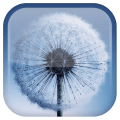 /APK_Dandelion-Live-Wallpaper_PC,411699.html