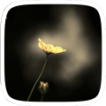 /APK_Golden-Flower_PC,55869114.html