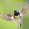 Kicau Burung (MP3)