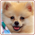 /APK_Cute-Dogs-Wallpapers_PC,26294583.html