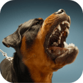 /Dog-Sounds-para-PC-gratis,1573827/
