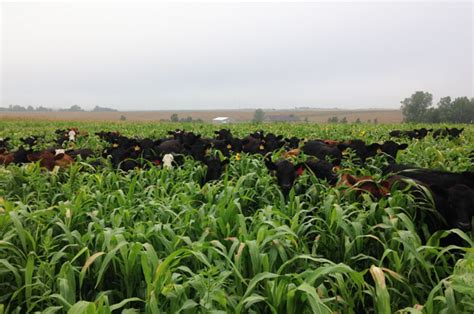Kansas farmer switches to cover crops for family time ...
