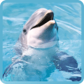 /APK_Dolphins-Live-Wallpapers_PC,51876539.html