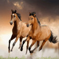 /hd-horse-wallpapers
