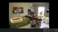 Bedroom Decor Games Free - Vienna Shopping Victim