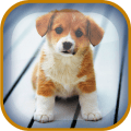 /APK_Puppy-Live-Wallpaper_PC,24572602.html
