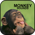 /monkey-sounds