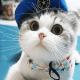 Cat theme-Cute,Adorable,Lazy windows phone