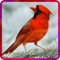 /APK_Bird-Live-Wallperpers_PC,26294469.html