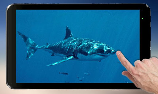 Shark Attack - Magic Touch PC