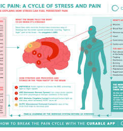 chronic pain a cycle of stress and pain how curable works infographic [ 1186 x 915 Pixel ]