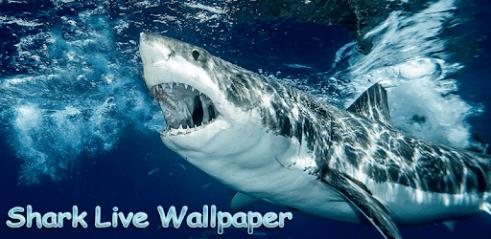 Télécharger Requin Fond D écran Animé Pour Pc Gratuit