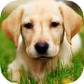 /dog-set-wallpapers