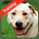 Dog Training windows phone