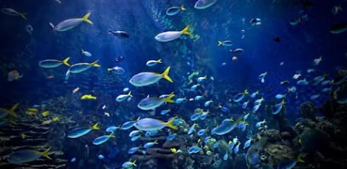 Télécharger Aquarium 4k Fond Décran Animé Pour Pc Gratuit