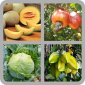 Fruit Quiz Game icon