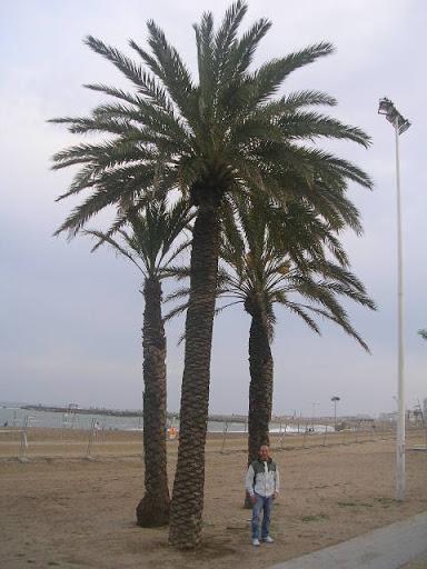 A Barceloneta