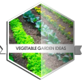 /APK_Vegetable-Garden-Ideas_PC,29072919.html