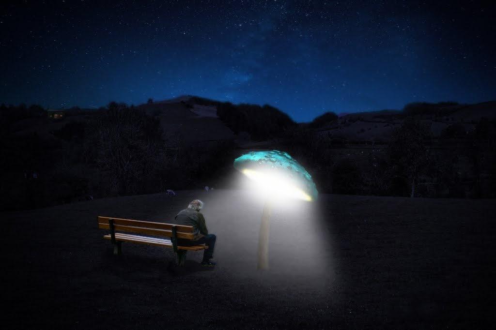 Underneath The Mushroom Lamp