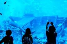 Sentosa Island Part 1 . Aquarium Of Largest