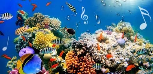 Fond D Ecran Aquarium Anime Gratuit Pour Pc Fermons Les