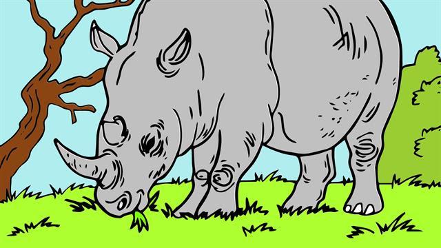 Dürer Rhinozeros Malvorlage