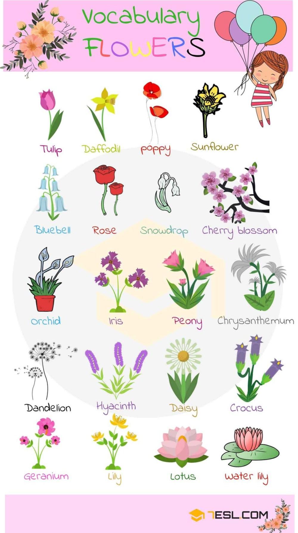 medium resolution of diagram of flower part