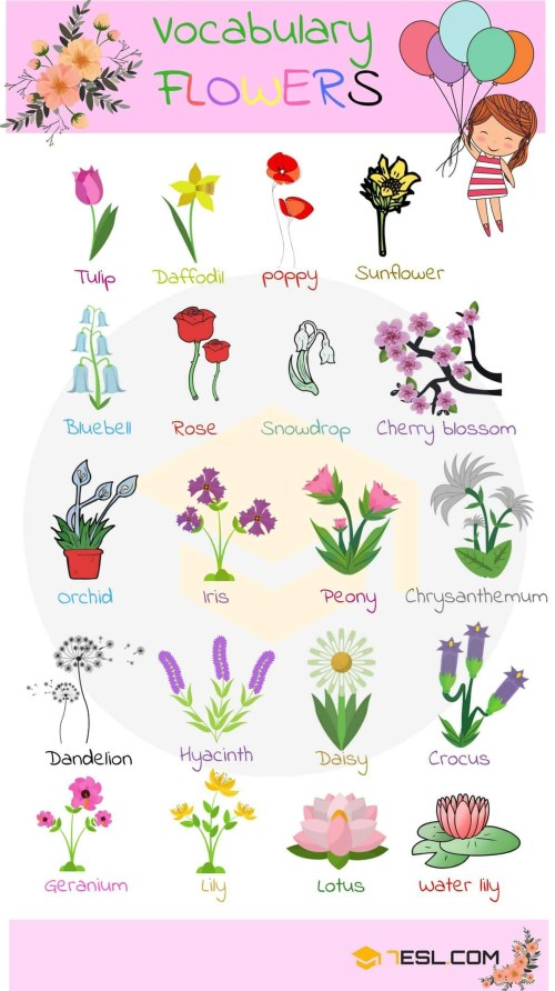 small resolution of diagram of flower part