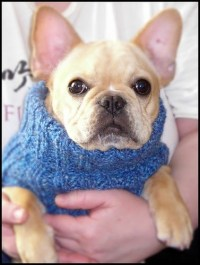 FINGERS' FANCY - a craft blog: Designer Dog Sweater