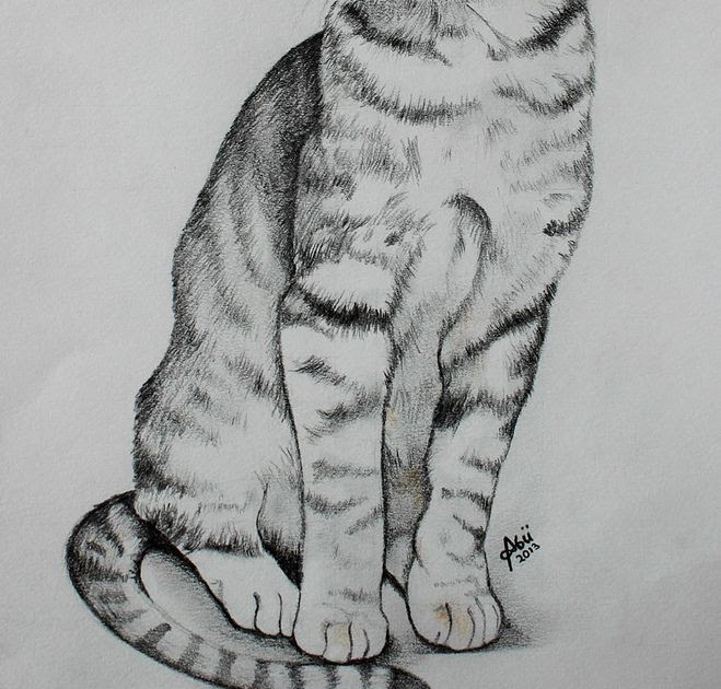 Malvorlage Katze Getigert Aiquruguay