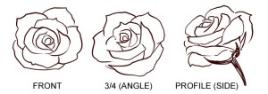 rose simple drawings step draw drawing sketch easy flower clip cliparts manga anime