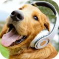/APK_Barking-Dog-Sounds_PC,4261614.html