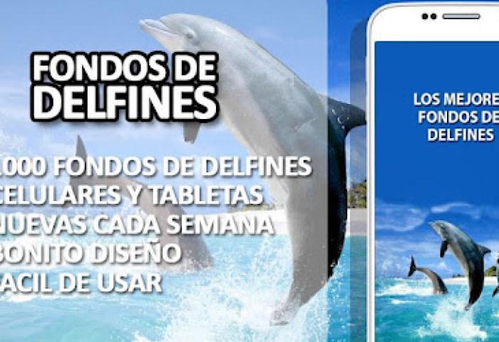 Fondos De Delfines Apps On Google Play