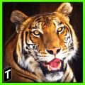 /APK_Super-Tiger-Sim-2017_PC,55644714.html