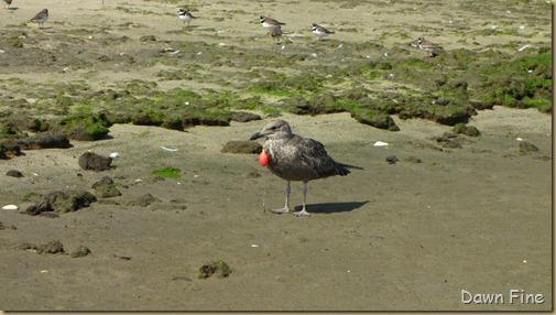 Birding Clamming_029