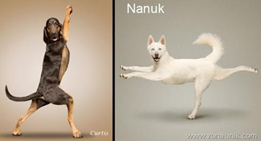Anjing Senam Yoga (10)