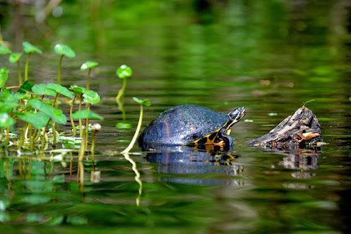 paddling into Snake Creek