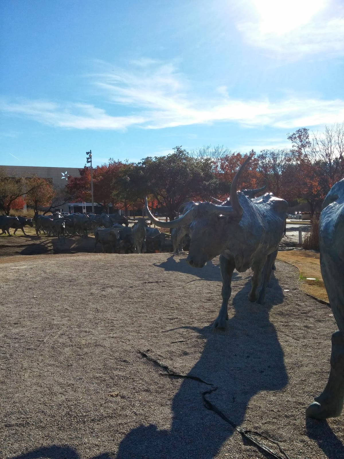 The Adventures Of Blogger Mike Cattle Stampede