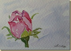 rosebudresize