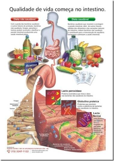 lactivos%252520intestino%252520saud%2525C3%2525A1vel_thumb%25255B5%25255D Você sabia que o nosso intestino é considerado o nosso segundo cérebro?
