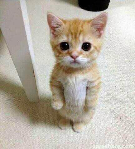 Gambar Lucu Kucing Imut yang Lucu