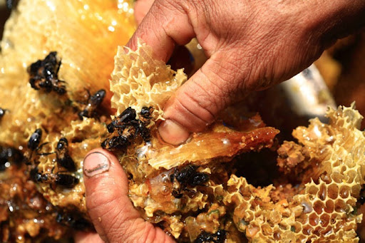 honey-cacciatori-nepal-35
