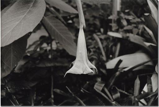 Botanical-Gardens-3-AP-56-Y-5-M-7