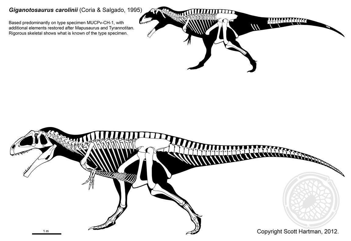 Dinosauria Lo Squalo Del Sud Tra Speculazione E Realta