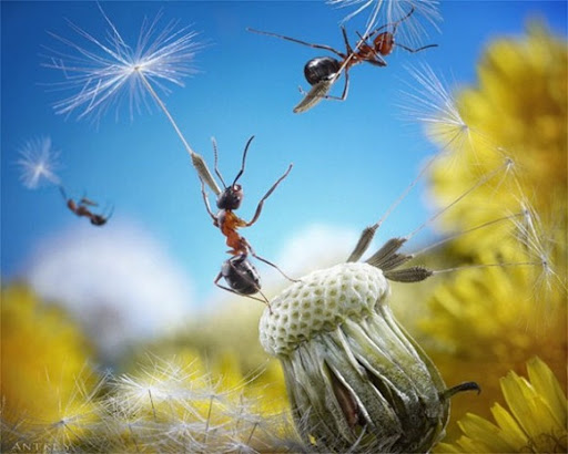 Life-of-Ants-Andrey-Pavlov-05