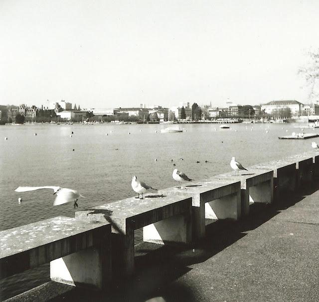 seagull_film2_2.jpg