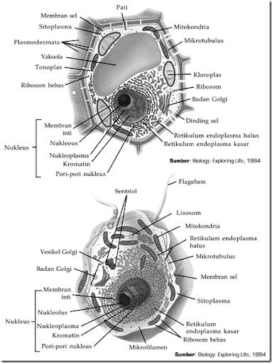 Gambar Membran Inti : gambar, membran, Biology, Update:, Struktur, Prokariotik, Eukariotik
