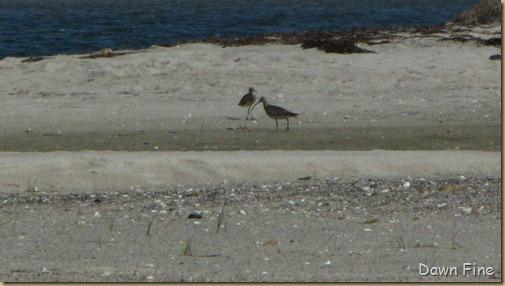 birding south beach_026