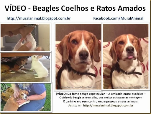 video-beagles