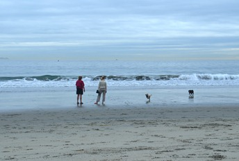 the Dog Beach on Coronado